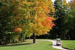 spadek kursowy golf zdjęcie royalty free