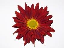 spadek kwiat Fotografia Royalty Free