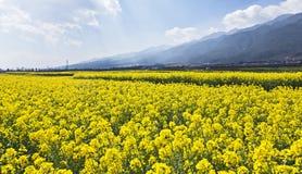 spadek kwitnie jasnożółtego Zdjęcia Stock