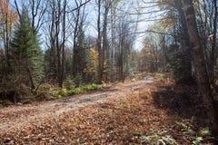 Spadek lasowa droga, Kanada Zdjęcia Stock