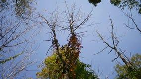 Spadek Lasowe serie - czasu drzewny kiwanie w wiatrze w wczesnej jesieni upływ zbiory