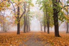 spadek mgłowy obrazy royalty free