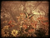 Spadek motyle obrazy stock