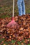 spadek ogrodnictwa liść świntuch Zdjęcie Stock