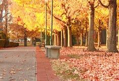 spadek park Fotografia Stock
