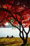 spadek parkowy Stanley Vancouver Fotografia Royalty Free