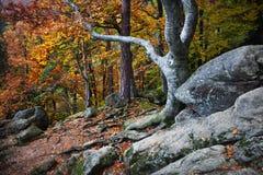 Spadek Po środku Starego lasu Zdjęcie Royalty Free