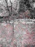 Spadek pogoda Fotografia Stock