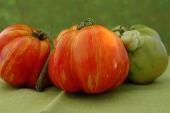 spadek pomidorów Zdjęcia Stock