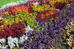 Spadek rośliny dla kwiatu łóżka Kolorowy ogrodowy flowerbed w jesieni Kwiatu łóżka projekt Zdjęcie Stock