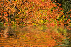 spadek rzeka Obrazy Royalty Free