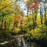 Spadek rzeka Fotografia Royalty Free