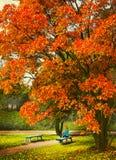 Spadek sceen z topolowego drzewa dziewczyną i ławką Fotografia Stock