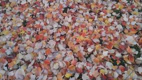 spadek spadać liść Zdjęcie Royalty Free