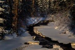 spadek strumienia bełkowiska zima Zdjęcia Stock