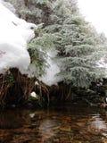 spadek strumienia bełkowiska zima Zdjęcie Royalty Free