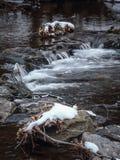 spadek strumienia bełkowiska zima Fotografia Stock