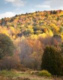 spadek ulistnienie Vermont zdjęcia stock