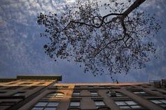 Spadek w central park, Nowy Jork Obraz Royalty Free