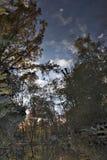 Spadek w central park, Nowy Jork Zdjęcia Royalty Free
