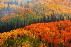 Spadek W Gunnison lesie państwowym zdjęcia royalty free