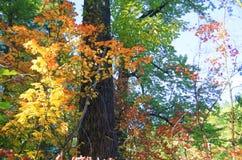 Spadek w lesie zdjęcie royalty free