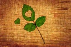 Spadek w miłości fotografii metaforze Liść klonowy z kierowym kształtem na drewnianym tle zdjęcia royalty free