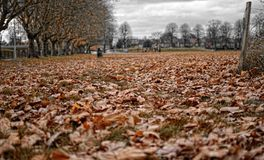 Spadek w parku zdjęcia royalty free