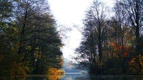 Spadek w parku z jeziorem 4K zdjęcie wideo