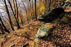Spadek z jesień liśćmi w lesie Zdjęcia Royalty Free