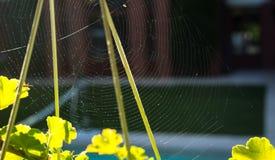 Spader rośliny z zielonymi liśćmi na czerwieni i sieć mieścimy tło Jesieni lata pojęcie zdjęcie stock
