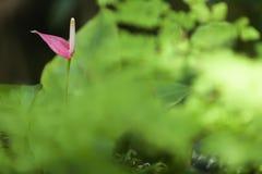 Spadix flower Stock Photography