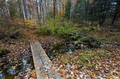 Spadków colours w Ontario Kanada gigantycznych dębowych drzewach obrazy stock