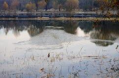 Spadków drzew odbicie jezioro Zdjęcia Royalty Free