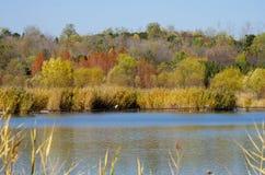Spadków drzew odbicie jezioro Fotografia Royalty Free