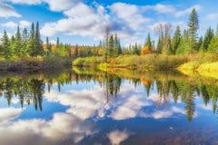 Spadków drzewa z jeziorem zdjęcia royalty free