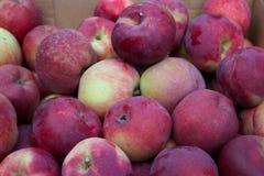 Spadków jabłka fotografia stock