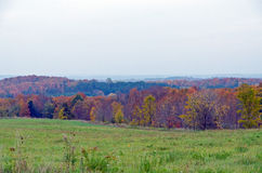 Spadków kolorowi drzewa Fotografia Stock