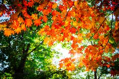 Spadków kolory pod niebem Obraz Stock