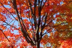 Spadków kolory w central park Fotografia Royalty Free