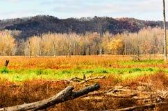 Spadków kolory w Górnym Mississippi schronieniu - Nowy Albin, Iowa Zdjęcia Stock