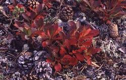 Spadków kolory w Lapland przy poziom terenu fotografia royalty free