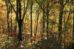 Spadków kolory wzdłuż Błękitnego grani Parkway obrazy royalty free