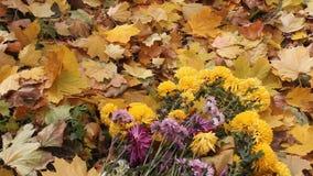 Spadków liście i bukiet chryzantemy zdjęcie wideo