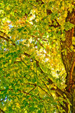 Spadków liście i Korowaty szczegół Zdjęcie Stock