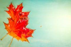 Spadków liście na błękicie zdjęcie stock
