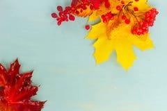 Spadków liście na błękicie zdjęcia royalty free