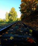 Spadków liście na taborowych śladach Zdjęcie Stock