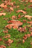 Spadków liście na zielonej trawie obrazy royalty free