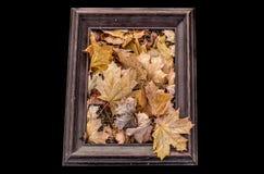 Spadków liście w ramie Fotografia Stock